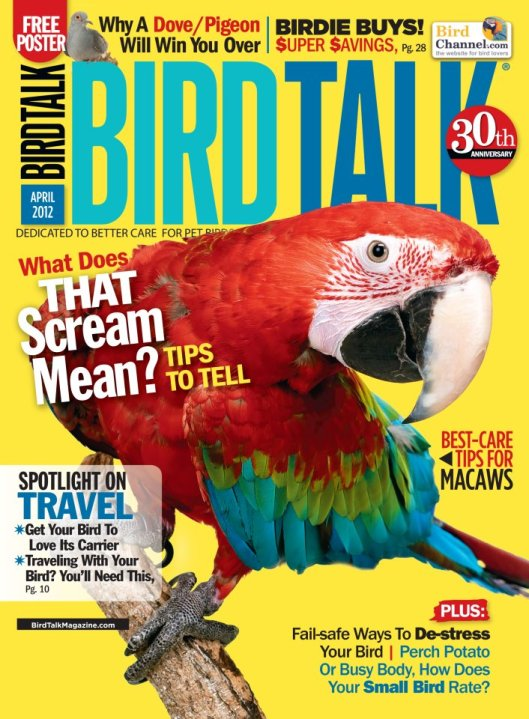 bird_talk